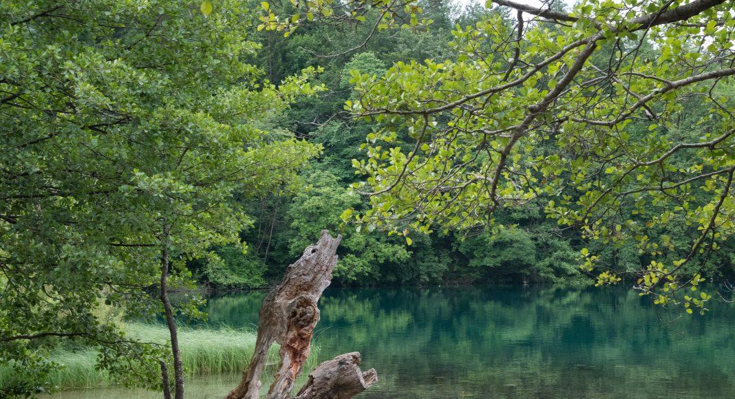 lacs_plitvice_arbre