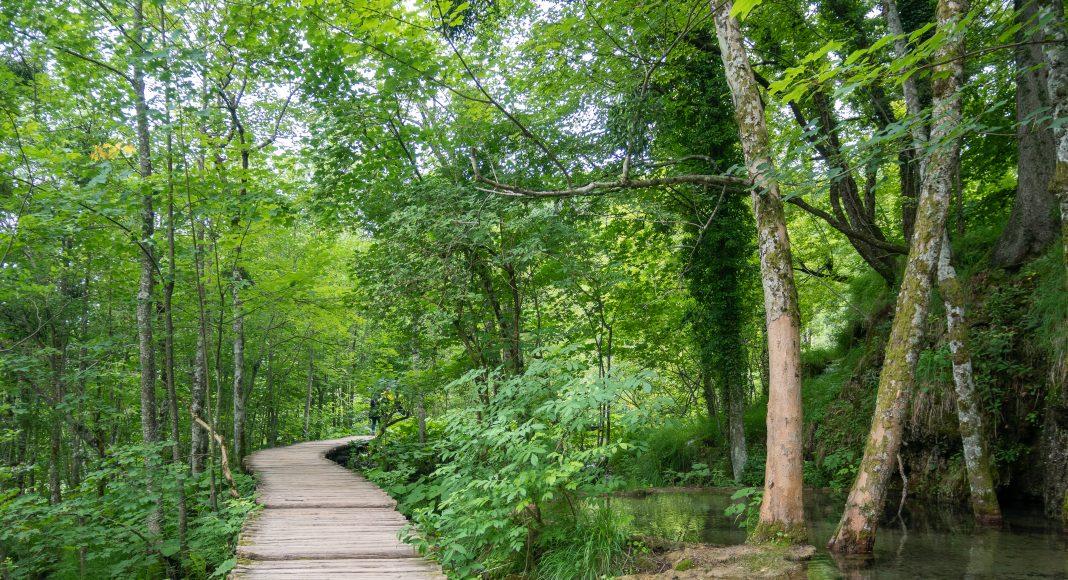 lacs_plitvice_chemin_vert